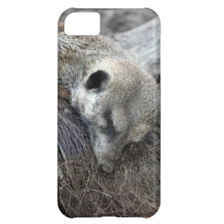 Nap Time Case For iPhone 5C
