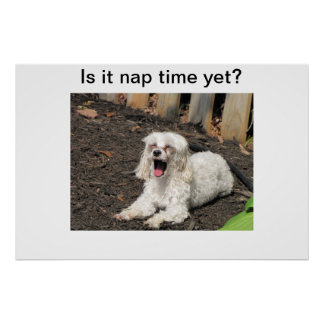 Nap time dog poster