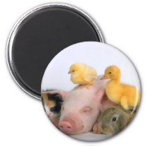 Nap Time for the Animals Magnet