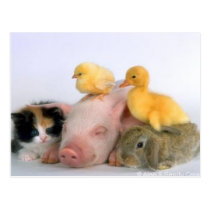 Nap Time for the Animals Postcard