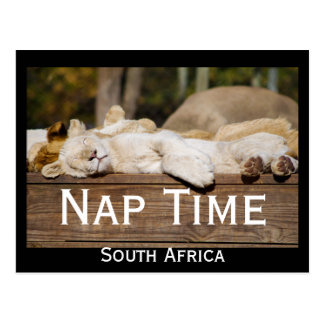 Nap Time Lion Cubs South Africa Postcard