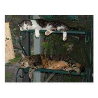Nap Time Post Cards