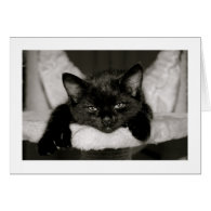 Nap With Me Greeting Cards