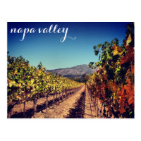 Napa Valley Autumn Harvest Vineyard Postcard