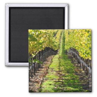Napa Valley California Grape Vineyard 2 Inch Square Magnet