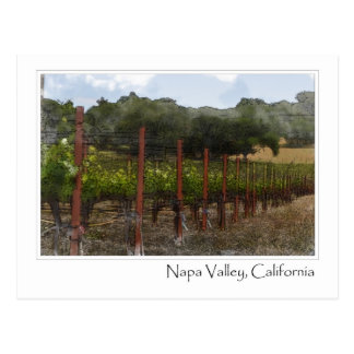Napa Valley California Vineyard Postcard