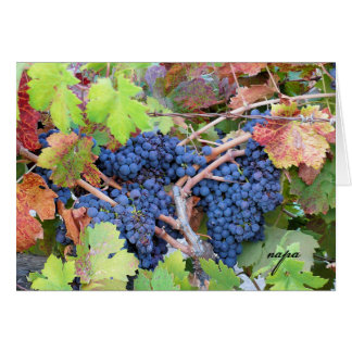 Napa Valley Harvest Greeting Card