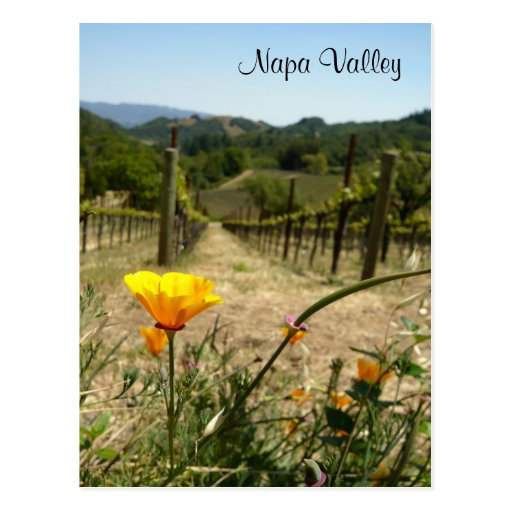 Napa Valley Spring Post Cards