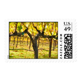 Napa Valley Vineyard in California Postage