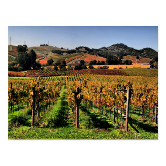 Napa Valley Vineyard Postcard