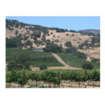 Napa Valley Vineyard Scape Postcard
