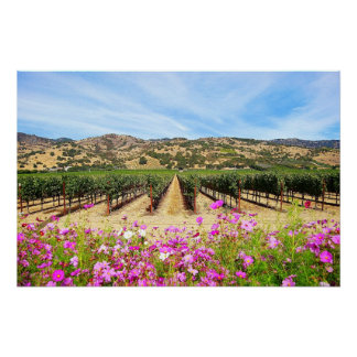 Napa Valley Vineyard with Cosmos Perfect Poster
