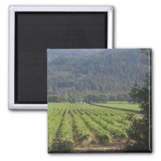 Napa Valley Vineyards I 2 Inch Square Magnet