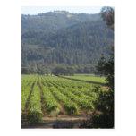Napa Valley Vineyards I Post Cards