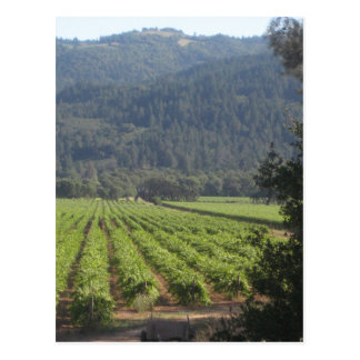Napa Valley Vineyards I Postcard