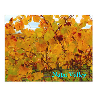 Napa Valley Wine Country Vineyard Postcard