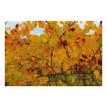 Napa Valley Wine Country Vineyard Poster