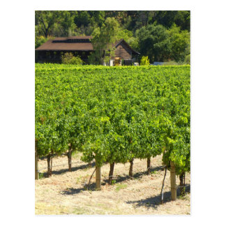 Napa Valley Winery Vineyard Postcard