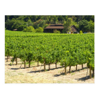 Napa Valley Winery Vineyard Postcard