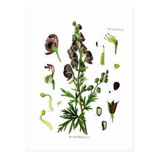 Napellus del Aconitum (acónito) Postal