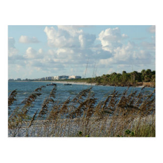 Naples Beach Dunes Postcard
