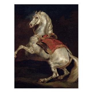 Napoleon's Stallion, Tamerlan Postcard