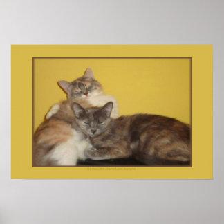 Nappers del gato póster