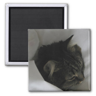 Napping Cat Magnet