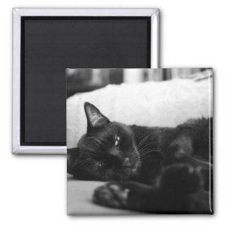 Napping Cat Fridge Magnet