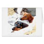 Napping Dogs Greeting Card