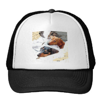 Napping Dogs Mesh Hats