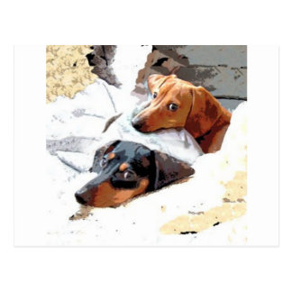 Napping Dogs Postcard
