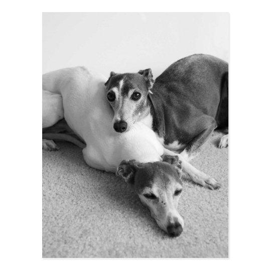 Napping Italian Greyhounds Postcard