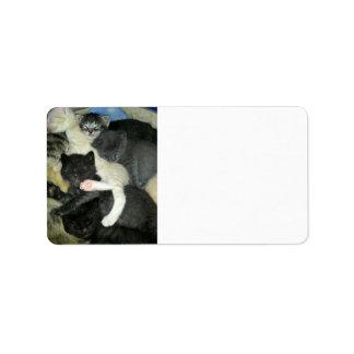 Napping Kitten Address Label