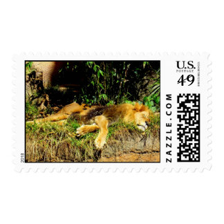 Napping Lion Stamp
