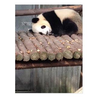 Napping Panda Postcard