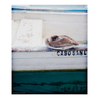 Napping Pelican Poster
