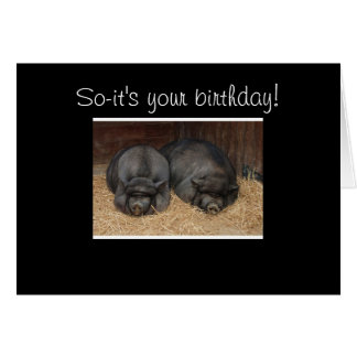 NAPPING PIGS GROUP BIRTHDAY CARD