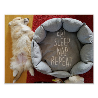 Napping Puppy  11'' x 8.5'' Poster