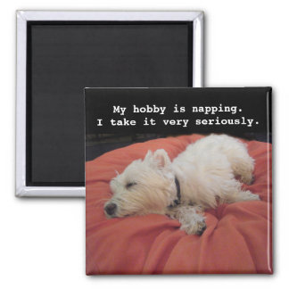 Napping Westie Photo Magnet