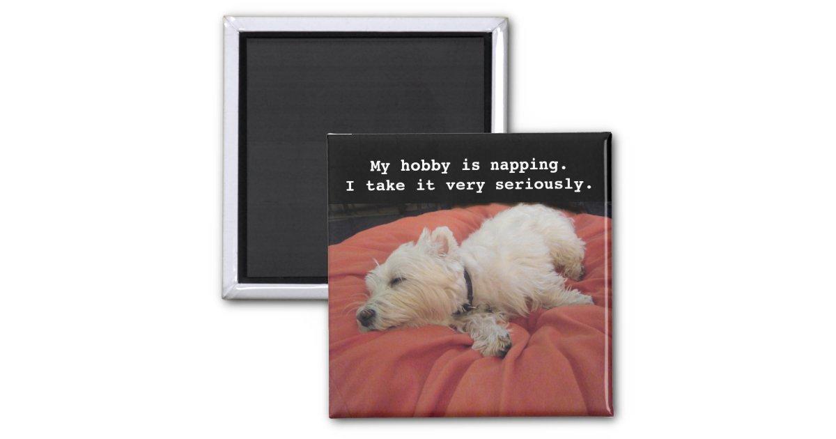 Napping Westie Photo Magnet | Zazzle com