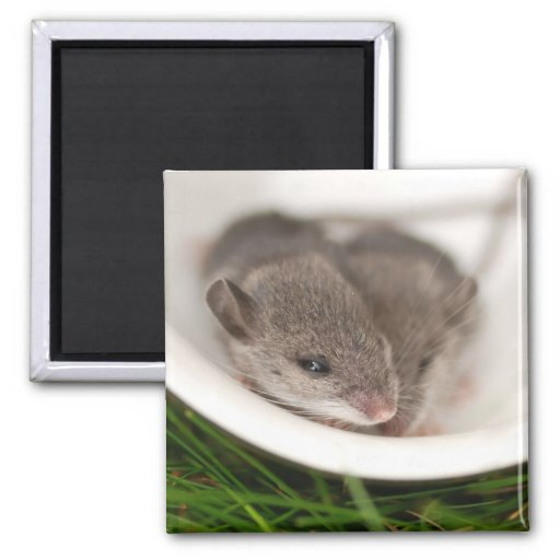 Naptime Baby Mice 2 Inch Square Magnet