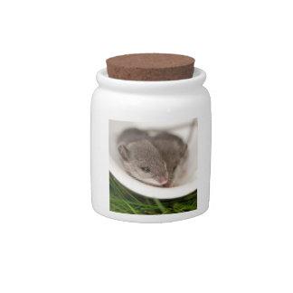 Naptime Baby Mice Candy Jars