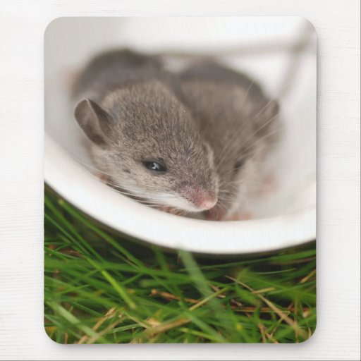 Naptime Baby Mice Mouse Pad