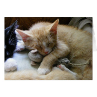 """Naptime"" Kittens Card"