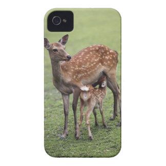 Nara Prefecture, Honshu, Japan 2 iPhone 4 Case-Mate Case