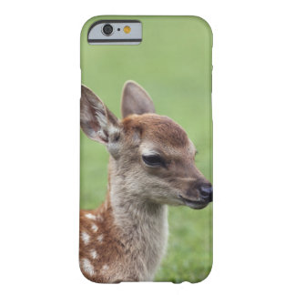 Nara Prefecture, Honshu, Japan Barely There iPhone 6 Case
