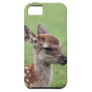 Nara Prefecture, Honshu, Japan iPhone SE/5/5s Case