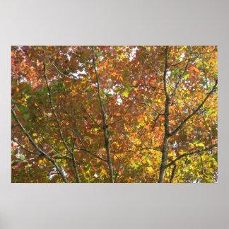 Naranja, amarillo, y hojas del verde posters