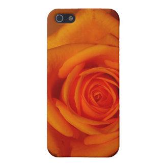 Naranja colorized subió contra fondo anaranjado iPhone 5 carcasa